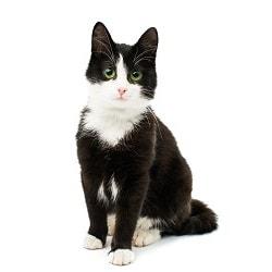 Zorgplan voor kat