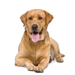 Zorgplan voor hond